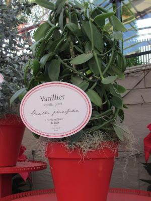 Vanillier