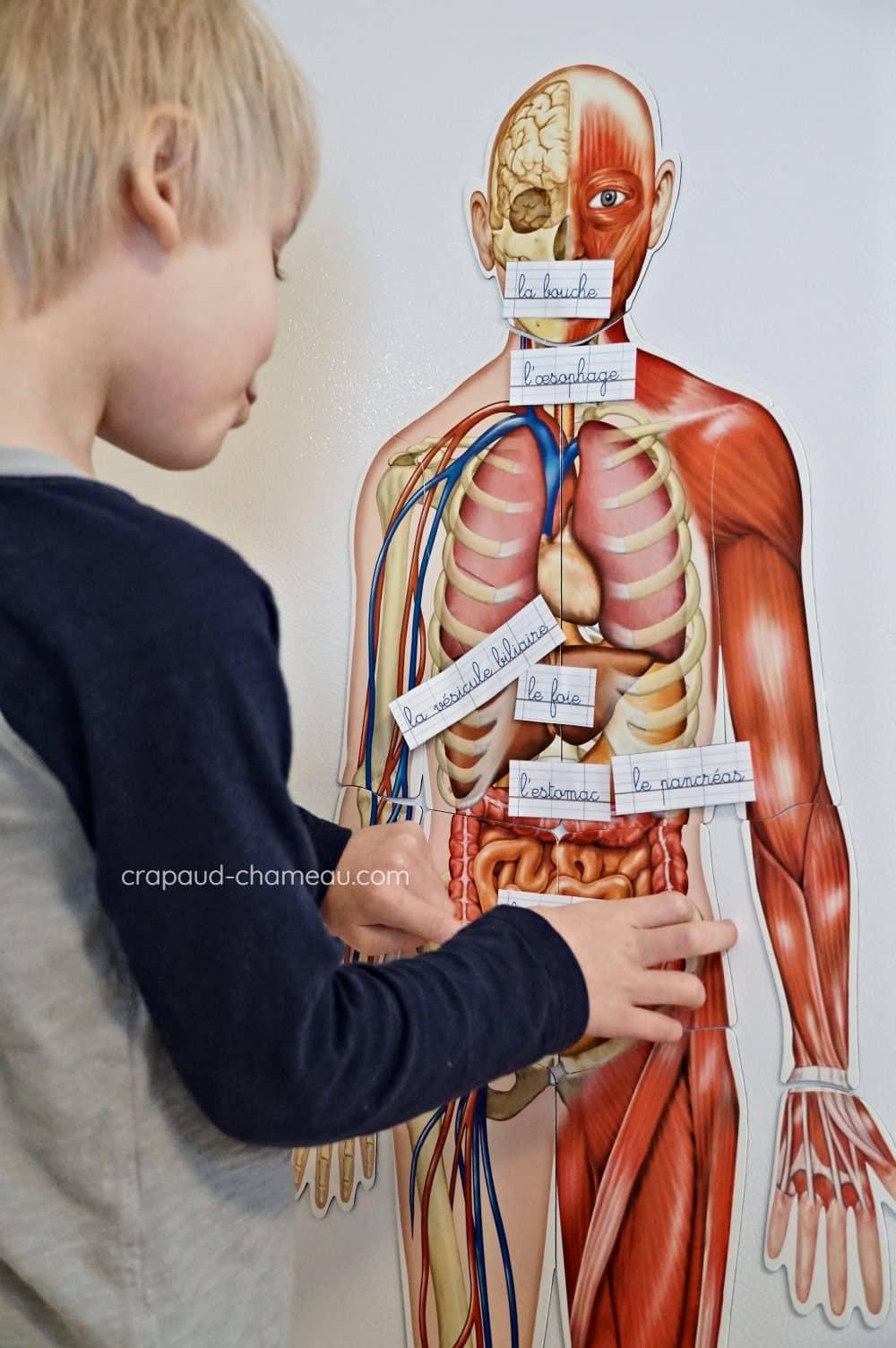 système digestif crapaud-chameau.com