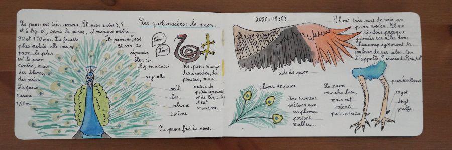 Nature journaling homeschooling copyright crapaud-chameau.com