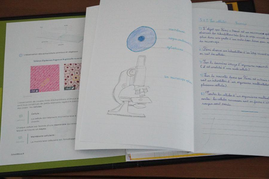 SchoolMouv Sciences école à la maison copyright crapaud-chameau.com
